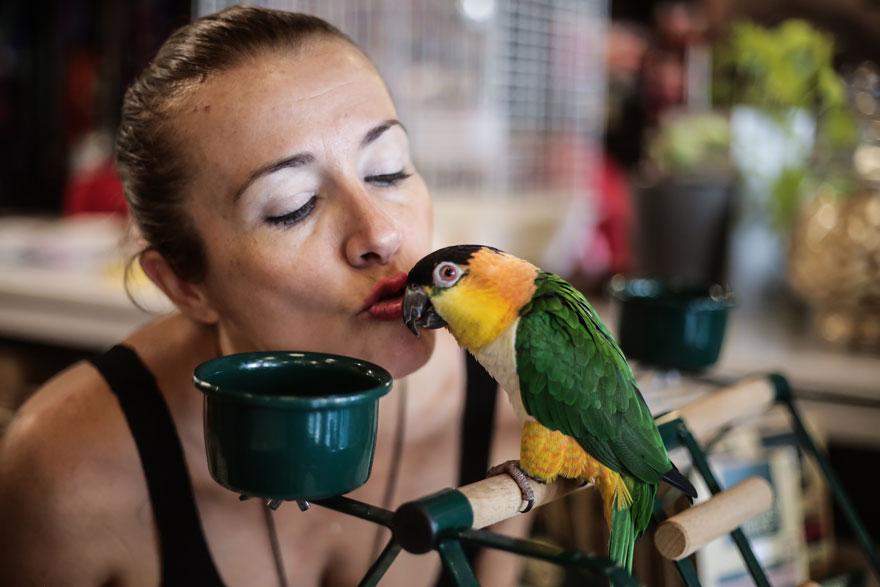 Pet Shop Creatures - Σοφία Βιδάλη