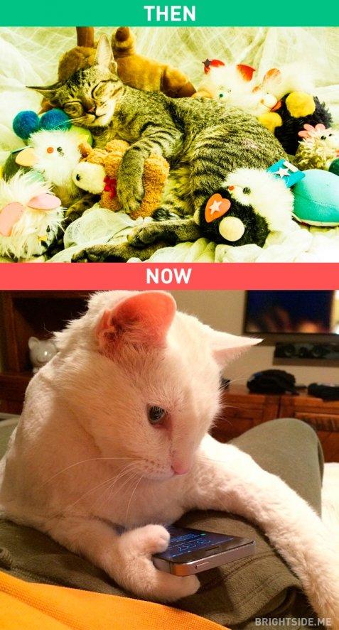 Γατάκι, όργιο