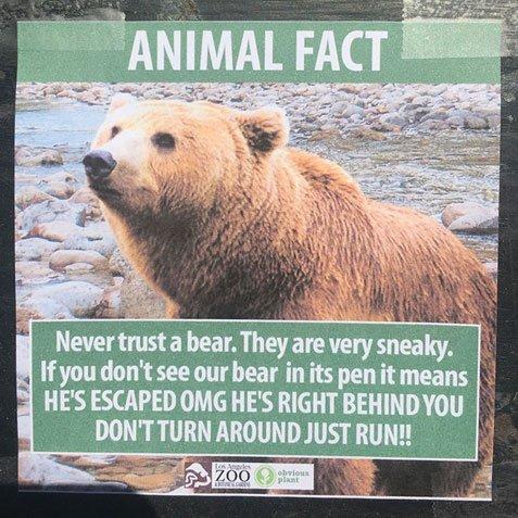 gay αρκούδα πίσω σεξ