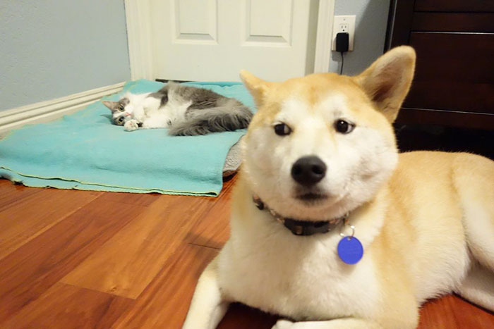 3bb873c0de6d Είναι γάτες. Κάνουν ότι θέλουν και δε δίνουν καρφί. Γιατί είναι γάτες. εδώ