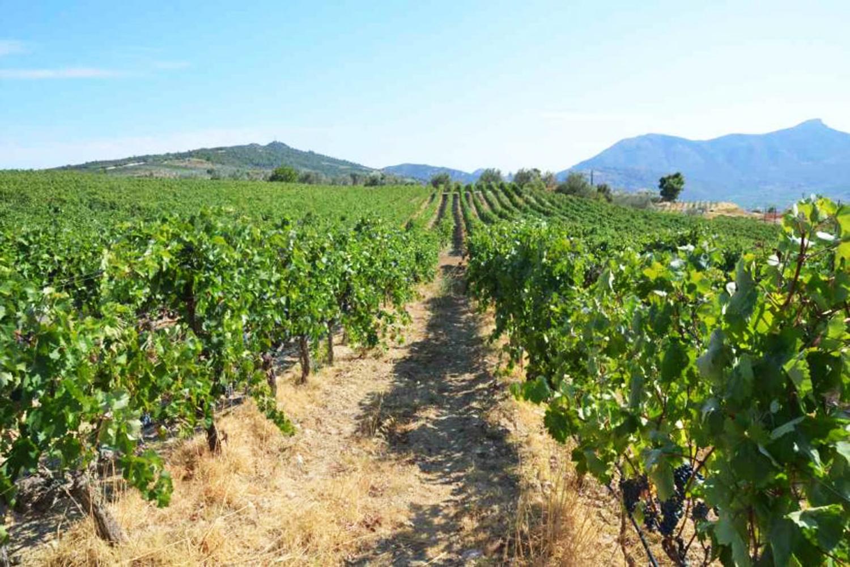 Δρόμοι κρασιού Νεμέα Τοσκάνη της Ελλάδας