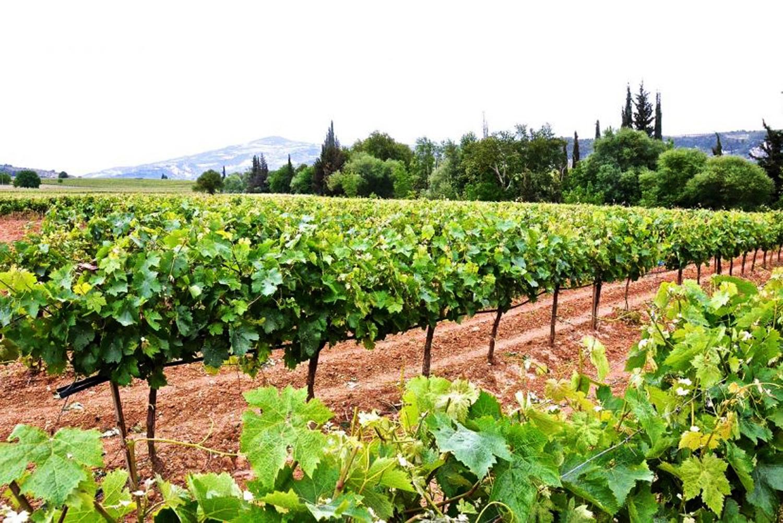 Δρόμοι του κρασιού στη Νεμέα την Τοσκάνη της Ελλάδας