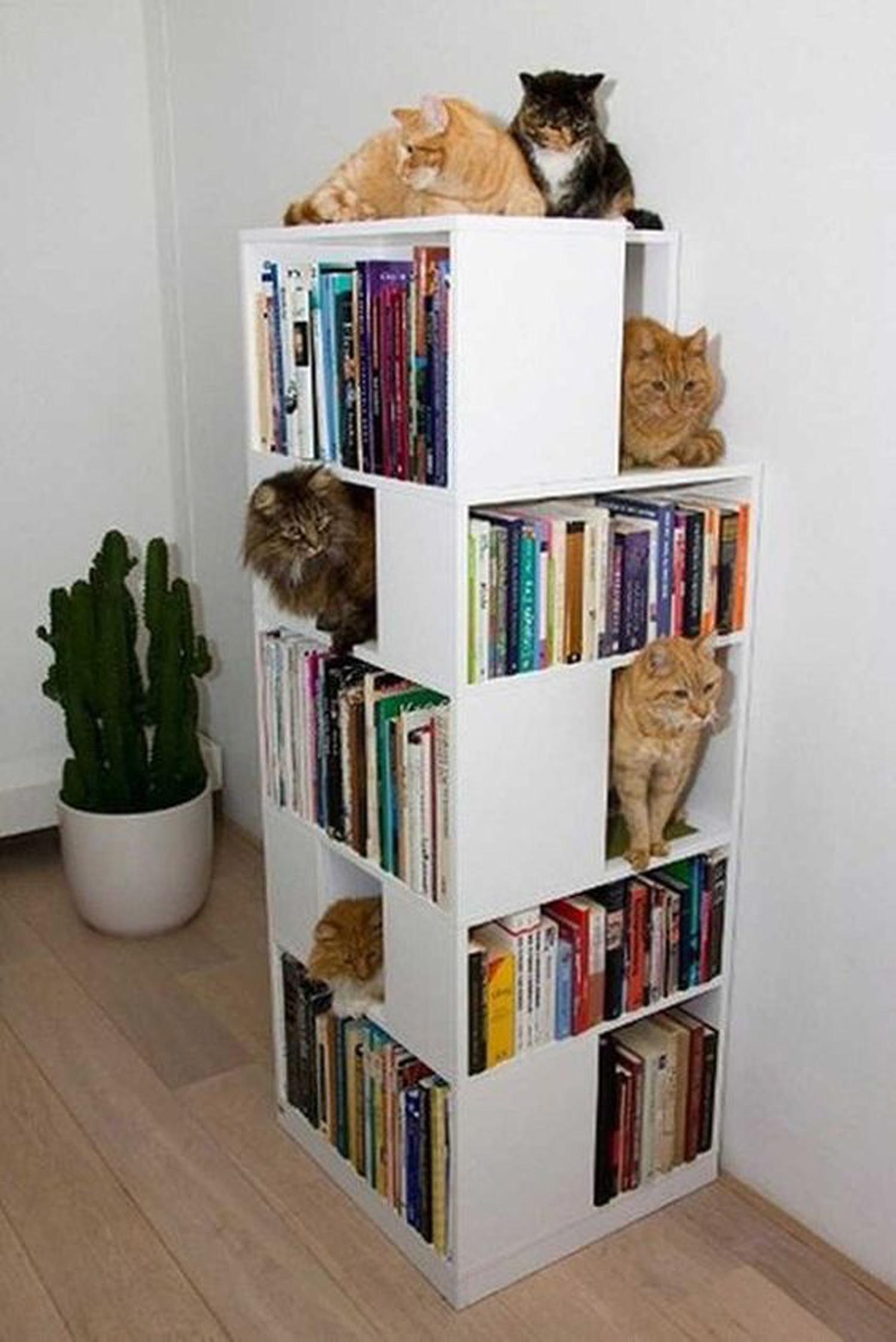 Αν έχεις περισσότερες γάτες από ότι βιβλία