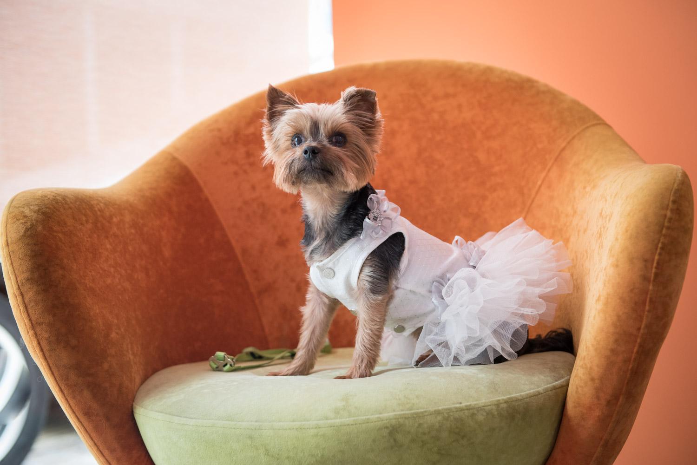 Μανκέν Μπιζού. Το μανκέν Μπιζού φοράει ένα κατάλευκο νυφικό με ασημένιες λεπτομέρειες και ποζάρει στο φακό σαν το σκυλί του Λουδοβίκου ΙΣΤ'. Μεγάλη ψωνάρα.