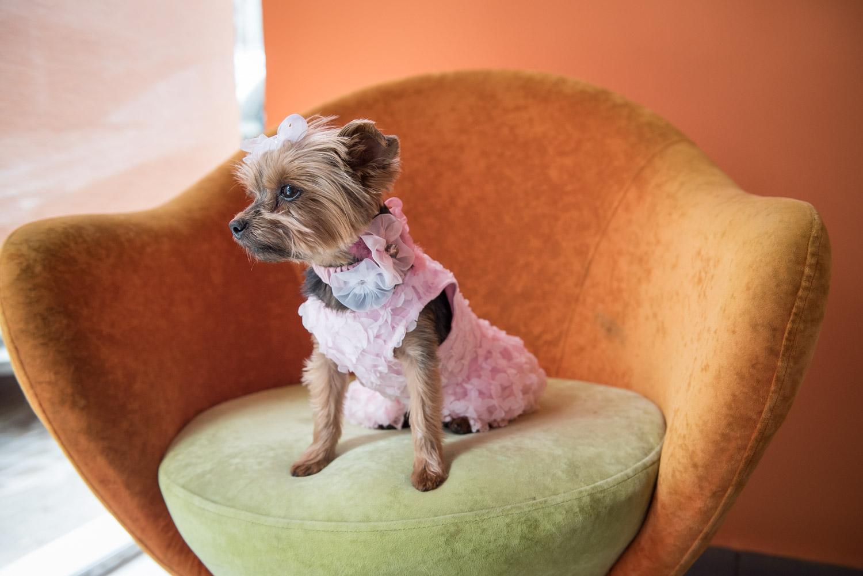 Και κλείνουμε με το Μανκέν Μπιζού. Η γνωστή ψωνάρα φοράει το ροζ της φόρεμα με ασορτί λουράκι στο λαιμό και αγναντεύει την ώρα που θα πάει σπίτι να ξαπλώσει στον καναπέ.