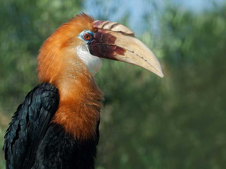 Δωρεάν γκέι τεράστιο πουλί