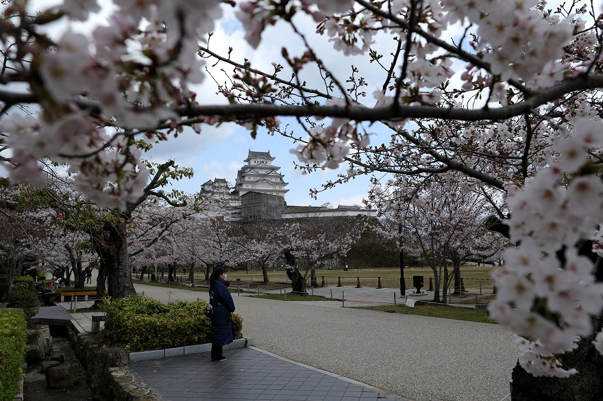Κήπος με τις κερασιές στην Ιαπωνία