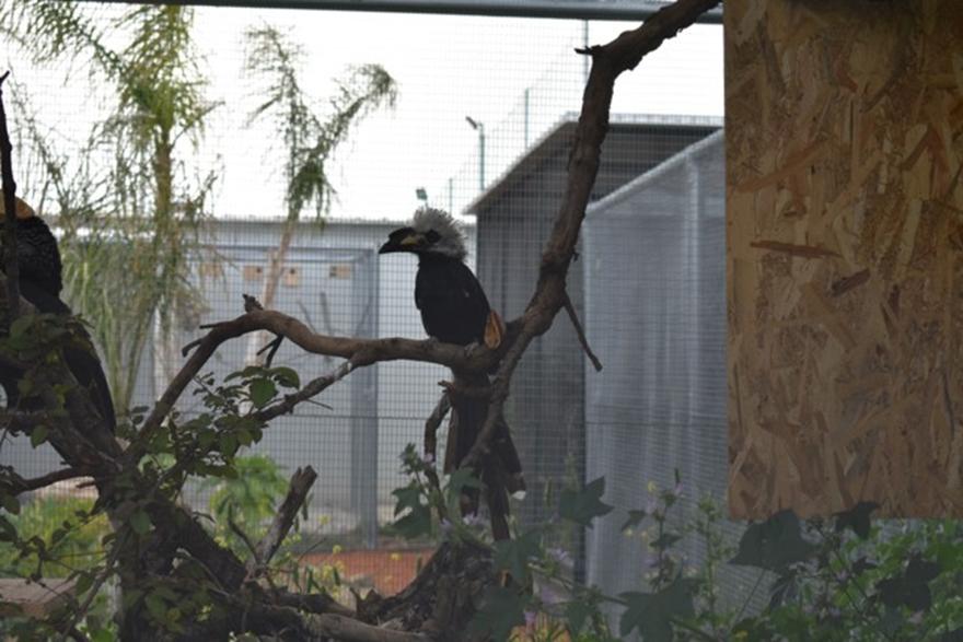 Μεγάλο ερασιτεχνικό πουλί